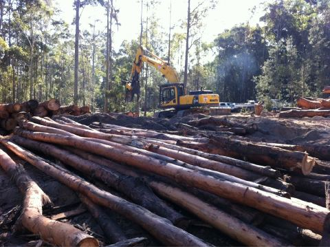 Devastation in our State Forests – mid North Coast