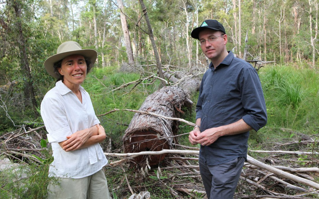 Greens call for overhaul of Forests NSW