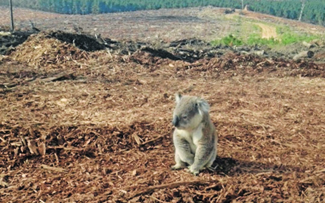 Greens Support Koala Park