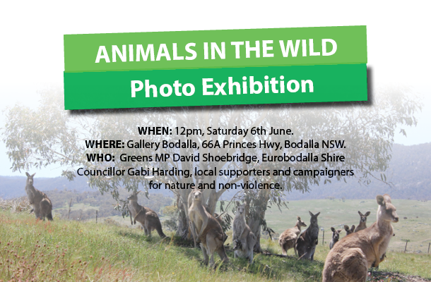 Animals in the Wild photo competition to announce winners