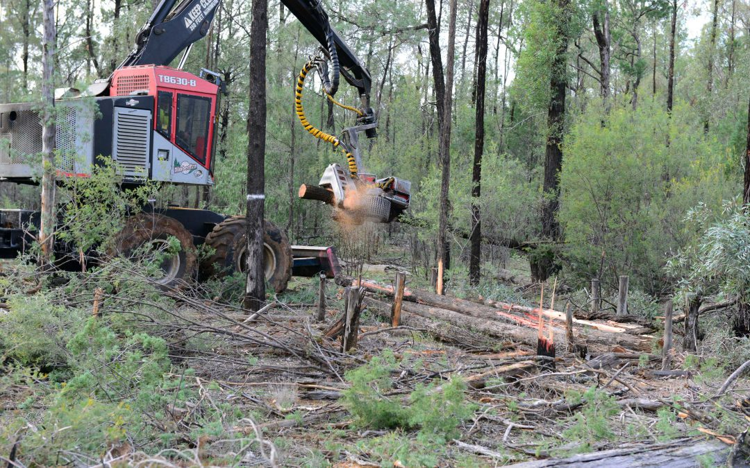 Sawmill owners 'forced' to destroy Pilliga forest in NSW