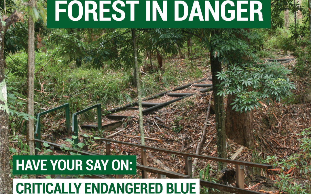 Have your say on the Cumberland Forest