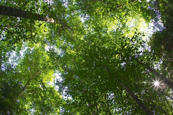 Greens thank Planning Minister for adopting Greens tree canopy policy